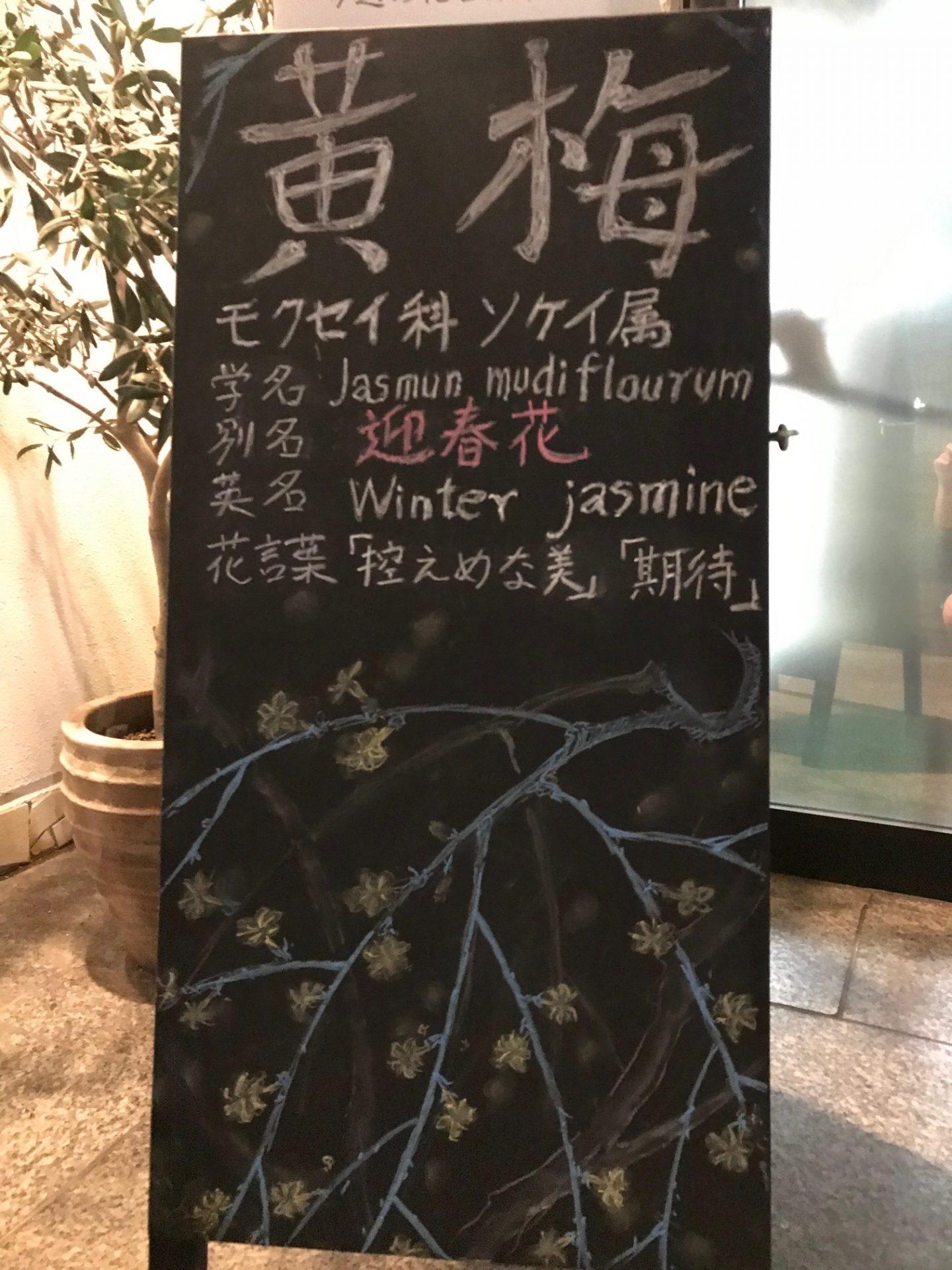 黄梅 〜別名:迎春花〜