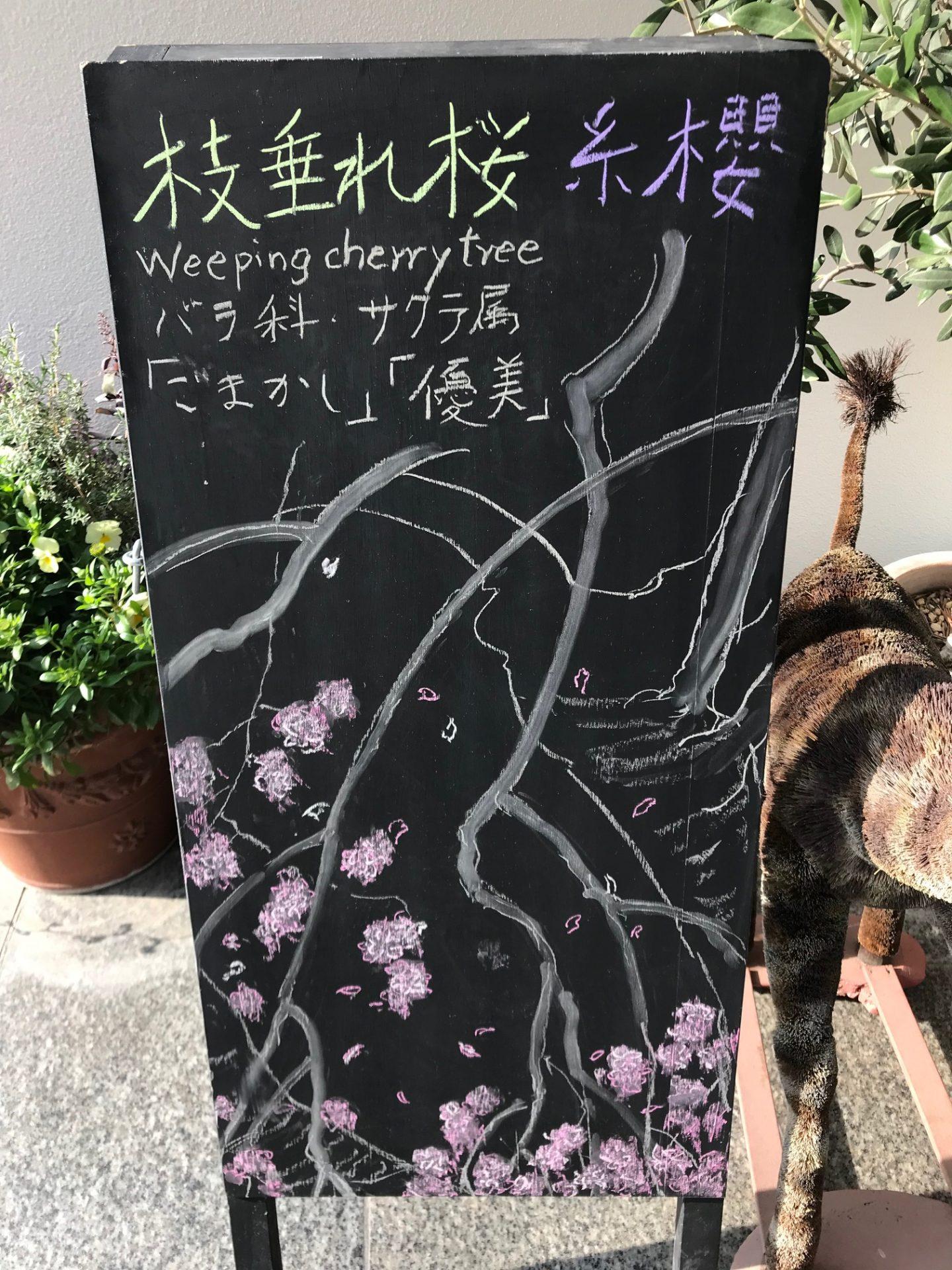 枝垂れ桜〜`*🌸