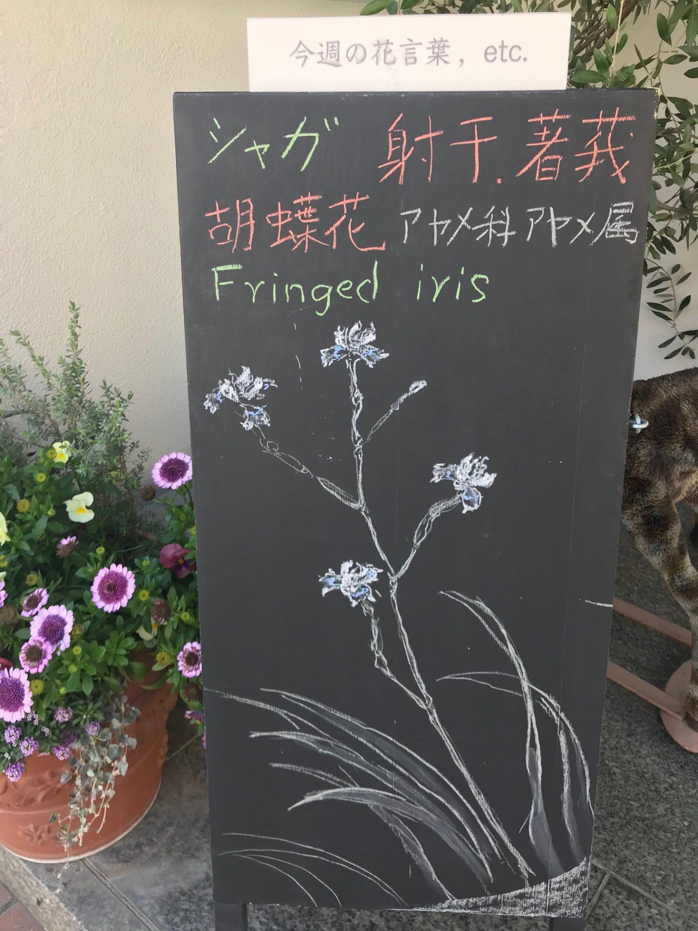 """""""Fringed iris"""""""